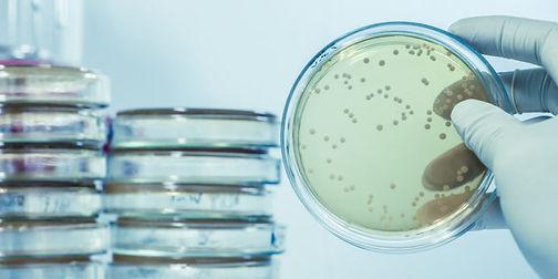 microbiologia-2-e1556317680514.jpg