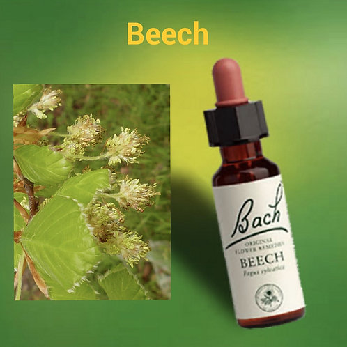 Beech - Bach Flower Remedy