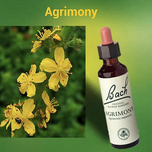 Agrimony - Bach flower Remedy