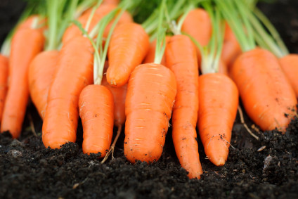 Carrots: Nature's Energy Enhancing, Immune Boosting, Super-Root