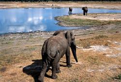 ElephantBullHwange