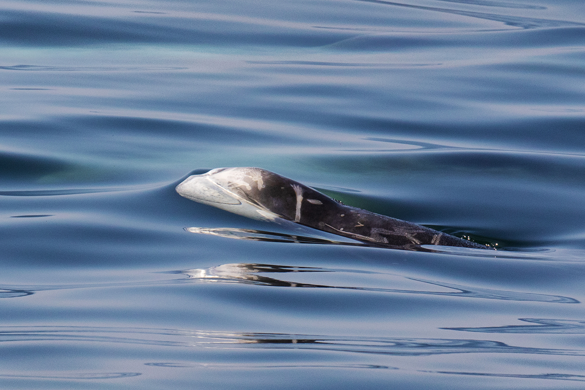 Dolphin_smile_3V2A8538