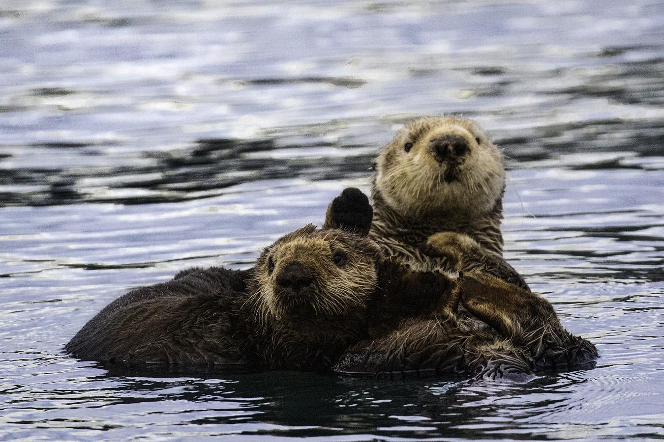Otter_mom_pup_3V2A3253