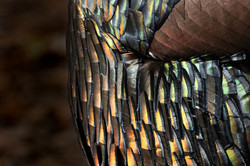 Feathers_3V2A2214
