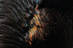 Feathers_3V2A2679