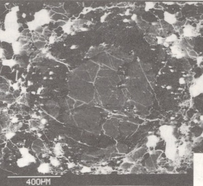 Microscópio Eletrônico de Varredura Cambridge Stereoscan 250