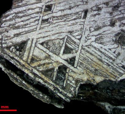 Estereomicroscópio Zeiss Discovery V8