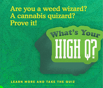 Cannabis Quiz.PNG