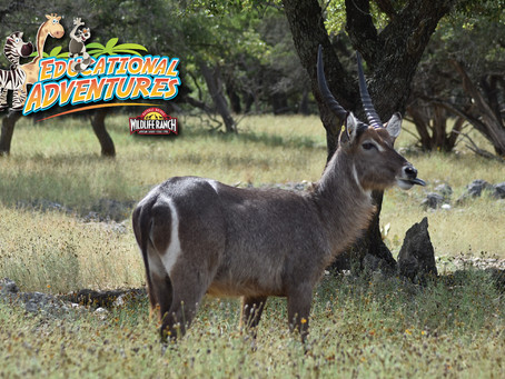 Teacher's Guide to Waterbuck Theory Prompt