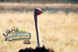 19: Ostrich Eyelids