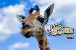 25: Giraffes Are Vulnerable