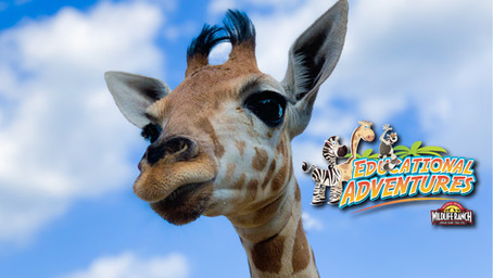 Teacher's Guide to Vulnerable Giraffe Prompt