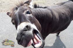 9: Donkey Talk
