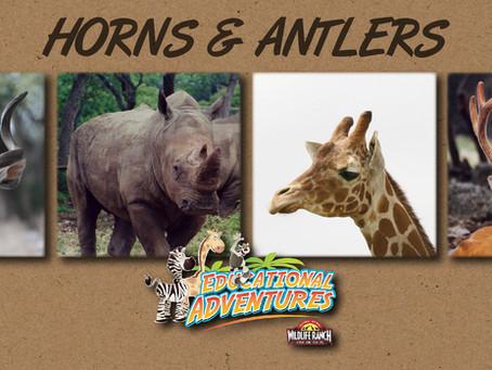 Horns & Antlers