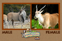 10: Eland, Compare and Contrast