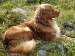 Tiergestützte Therapie Verhaltenstherapie