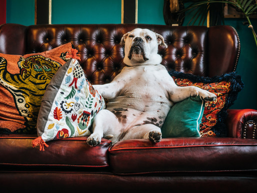 Frau Doktor, darf mein Hund aufs Sofa?