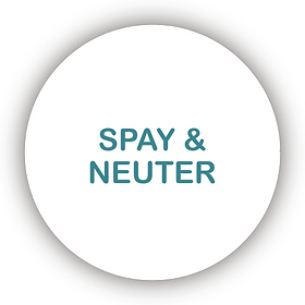 Spay & Neuter Icon.png