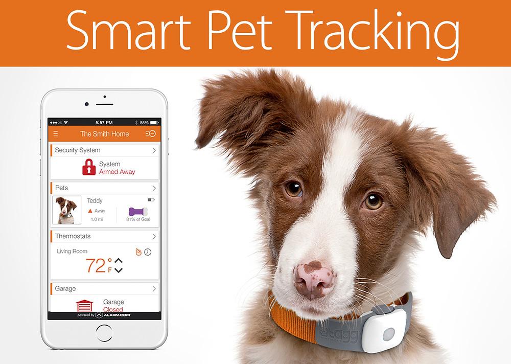 Pet Tracking 1.jpg