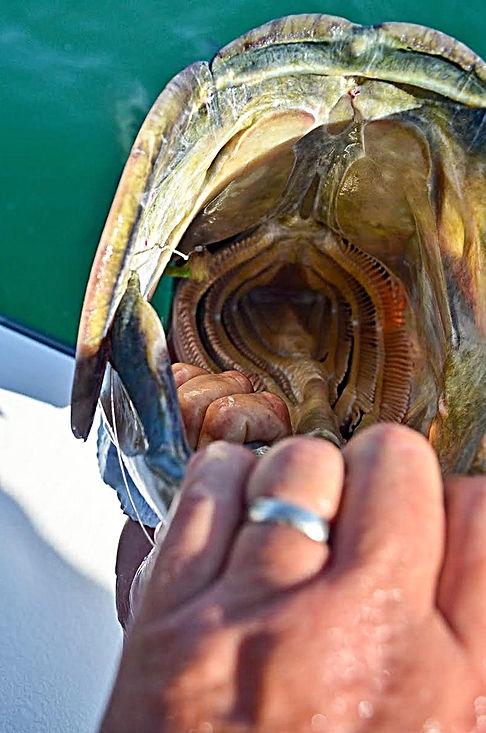 S.C. tarpon fishing, Myrtle Beach fishing guide, Charleston fishing guide, S.C. flyfishing, flyfishing tarpon S.C., Georgetown S.C. fishing guide, Pawleys Island fishing charters, S.C. fishing charters, S.C. flyfishing charters, Myrtle Beach flyfishing, Myrtle Beach fishing charters, Georgetown S.C. flyfishing guide,