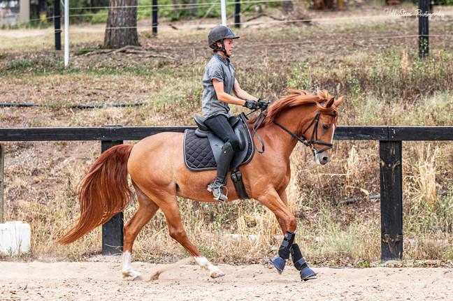 Half Steps Photography - Sydney Equestri