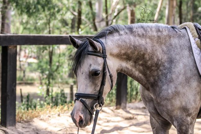 Half Steps Photography - Sydney Horse fo