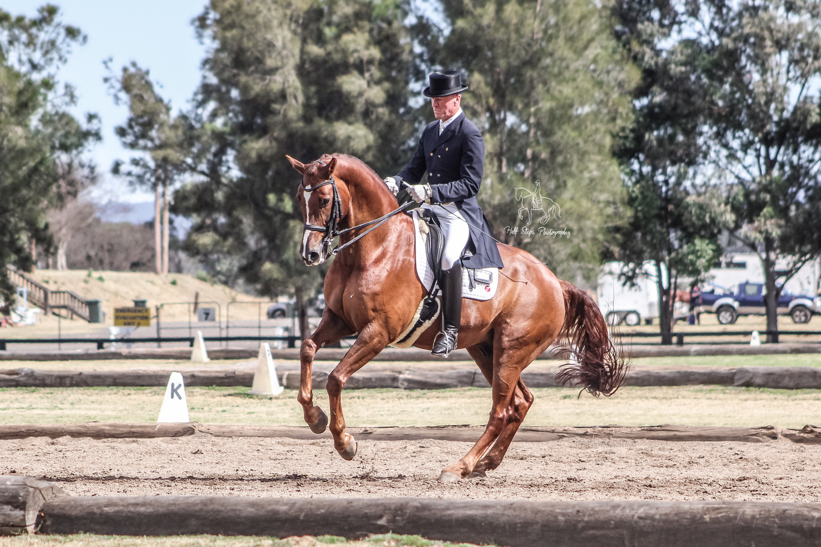 Half Steps Photography Sydney Equine Photographer