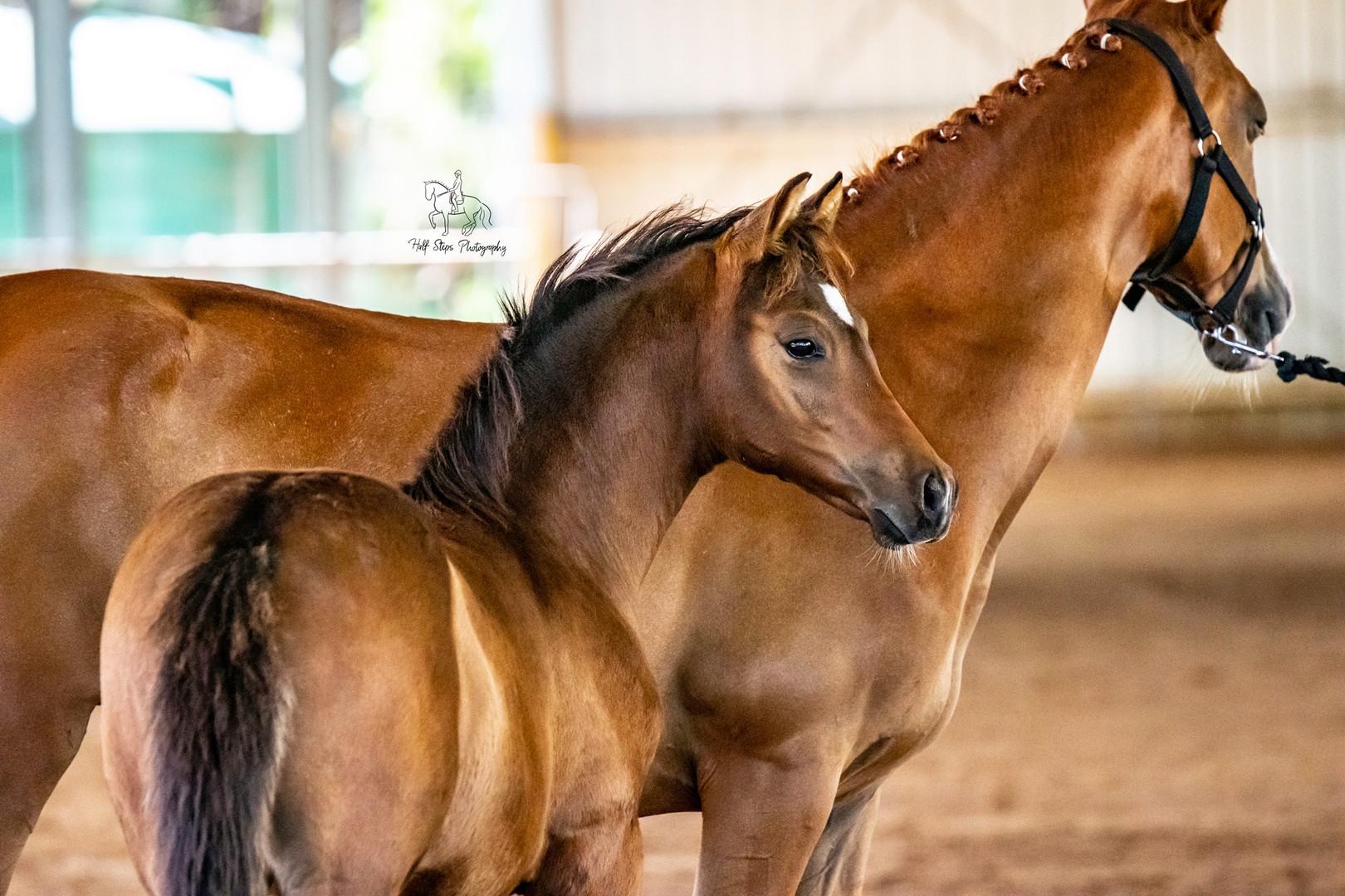 Half Steps Photography - Sydney Horse Ph