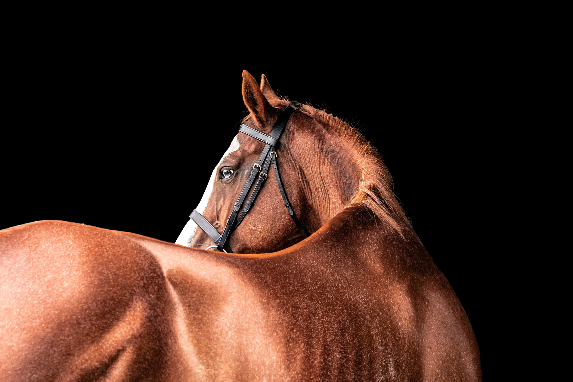 Equine Fine Art Sydney photography