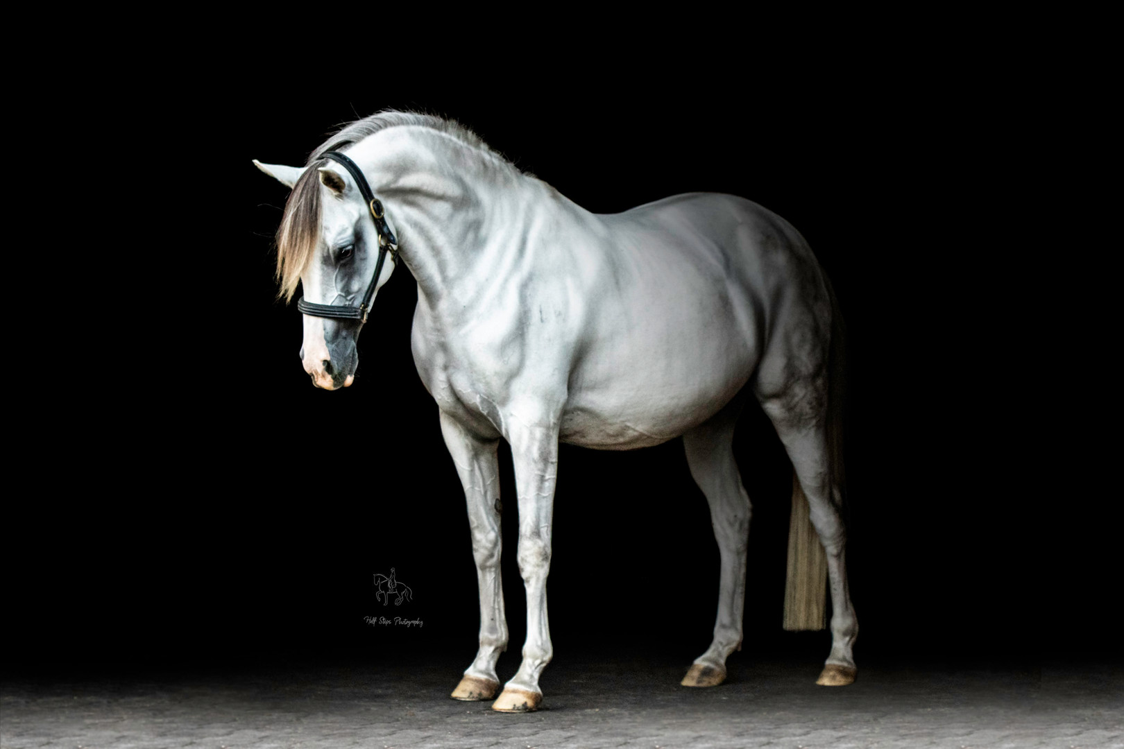 Black Background Equine Fine Art session