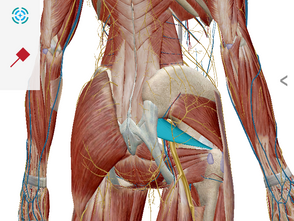 Class notes #12 Sorting out Back/Hip Pain