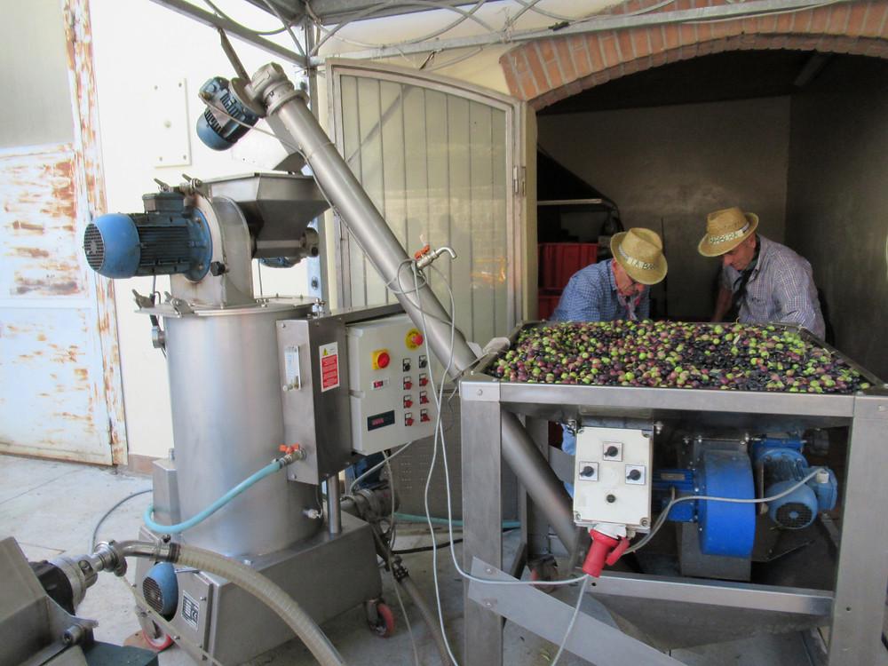 olive mill in Castelvetro of Modena
