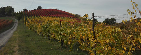 castelvetro foto autunno.jpg