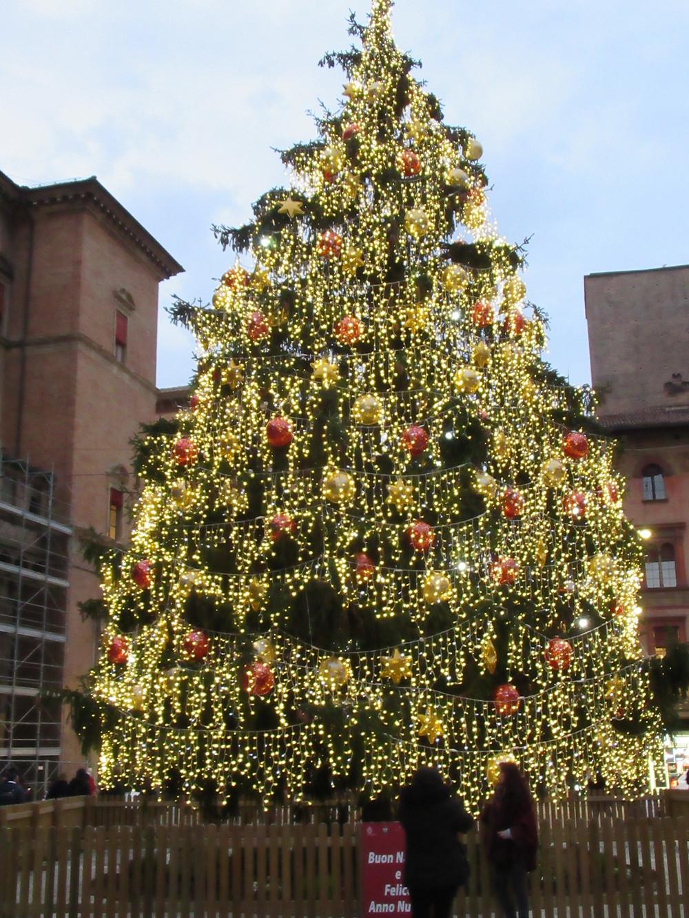 Christmas tree in Piazza Maggiore