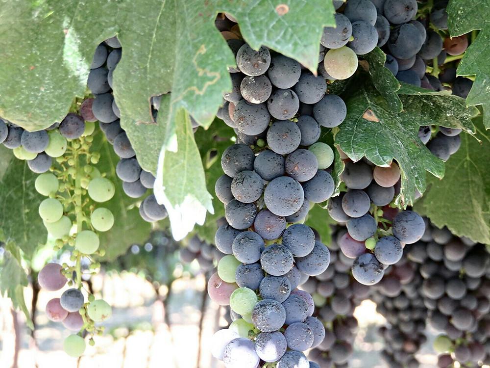 Wine tour Emilia Romagna