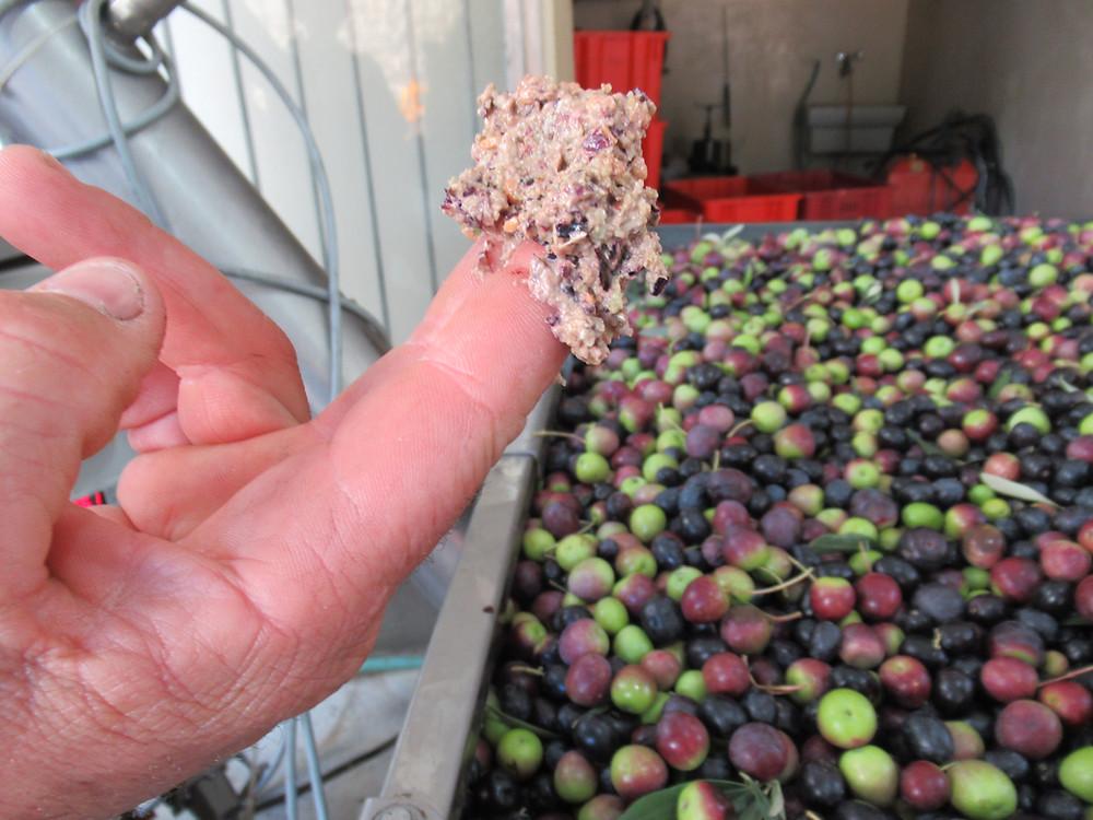 """olives """"sansa"""""""