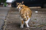 名もない野良猫 -智恵光院物語-