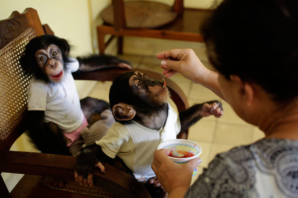 Marta and the chimps