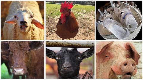 Zoom - Farm Animal.png