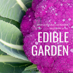 When to Harvest Cool-Season Vegetables in the Edible Garden