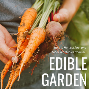 How to Harvest Root and Tuber Vegetables from the Edible Garden