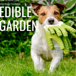 How to Deter Dogs and Cats From the Edible Garden