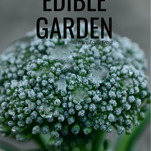 How to Protect the Edible Garden from Early Frost