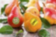 GMO_pears_1050x700.jpg