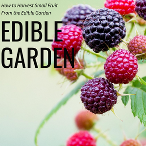 How to Harvest Small Fruit From the Edible Garden