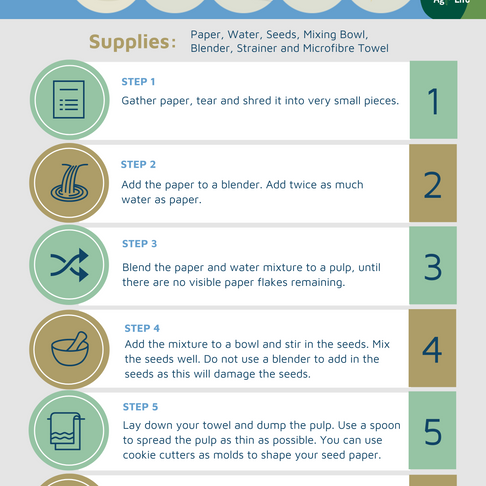 6 Steps to Making SEED PAPER!