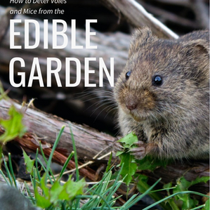 How to Deter Voles and Mice from the Edible Garden