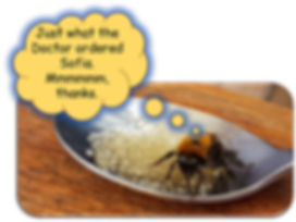 Bee on spoon2.png