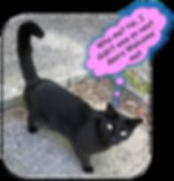 Cat on Website2.png