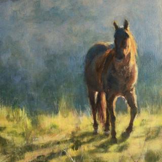 """""""Horse at Sundown"""""""